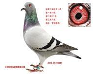 北京铁鹰三关综合10名