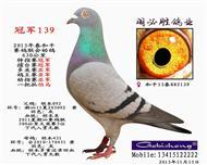 胡本冠军139已出售四川