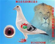 """""""狮王号""""全兄弟x""""狮王号""""直女"""