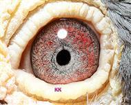 766眼睛