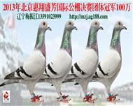 辽宁梅振江13年北京惠翔公棚决赛团体冠军