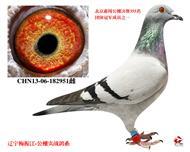 2013年北京惠翔团体冠军之一