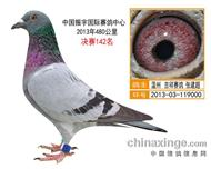 中国振宇国际赛鸽中心 决赛142名
