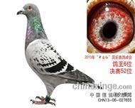 """2013年惠翔""""中国红""""赛鸽峰会鸽王6位"""