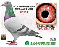 2012年秋北京中瑞绿盟880公里23名