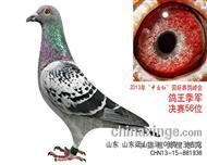 2013年惠翔决赛56名鸽王季军