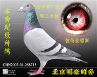 """""""鸽王六位"""""""