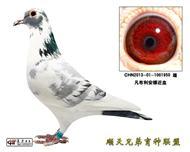 凡布利安娜近血以售北京鸽友
