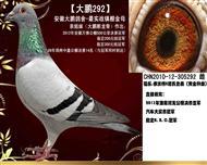 【大鹏292】大鹏鸽舍