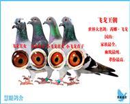 飞戈王朝(大小飞戈全家福)