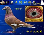 极品火凤凰342