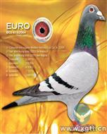 父亲:世界名鸽欧元