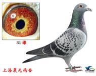 上海31号非卖品