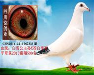 四川铭鸽业