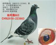 杨阿腾663