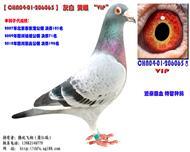 CHN04-01-206065 VIP