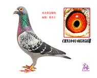 CHN10-01-085958雄