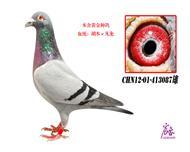 CHN12-01-413087雄