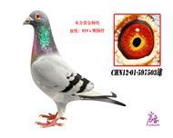CHN12-01-597503雄