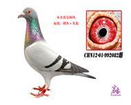 CHN12-01-992082雌