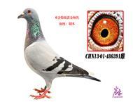 CHN13-01-486391雌