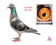 CHN13-01-973986雌