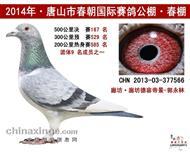 2014年唐山春朝国际公棚167名