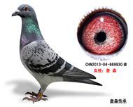 詹森子代鸽-669930(已售)