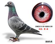 詹森子代鸽-669910(已售)