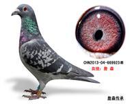 詹森子代鸽-669923