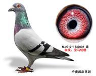 宝马优德种鸽1737002