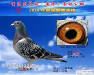 2014年春重庆宏艺翔公棚决赛季军!