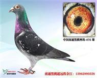 黑桃076(�H供欣�p)