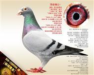 """【福禄鹰皇】""""芬妮卡5000""""外孙 !"""