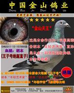 """胡本""""年轻艺术家""""直孙""""金山天王号"""""""