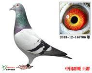 群鹰706