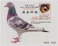 年轻46直孙(杨迪汉国内最高辈分)