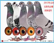 2013秋云南太阳鸟公棚团体冠军!
