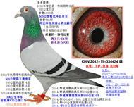 13春特比亚军(已售北京)