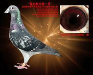 基尼斯中国1号(2014年12月摄)
