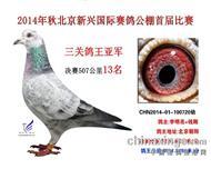 【北京新兴国际公棚三关鸽王亚军】