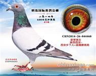 甘肃明珠41名(已售)