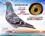 甘肃明珠114名(已售)