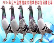 捷威幼鸽团体亚军成员