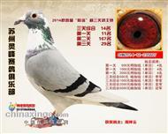 14年苏州灵峰赛鸽俱乐部三关鸽王14名