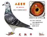 北京.百鸽园联盟杯综合鸽王10名母亲.