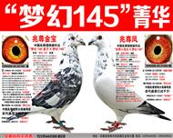 """苍白骑士王牌""""梦幻145""""梦幻组合(十)"""