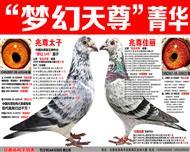 """苍白骑士王牌""""梦幻145梦幻天尊""""菁华"""