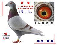 鑫磊-183