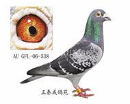 幻影直子AU06―GFL―538